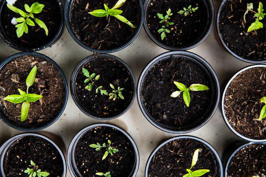 Small green plants sprouting from a home garden, one of the simple bucket list ideas.