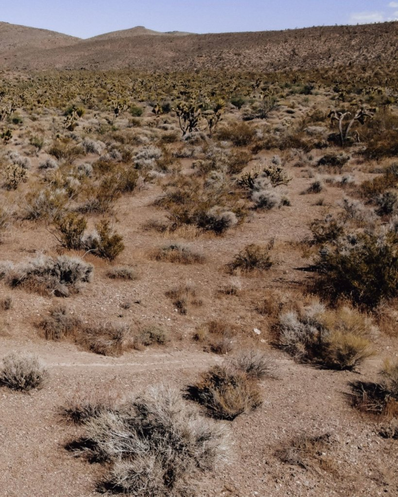 The Mojave Desert with brown earth and joshua trees.