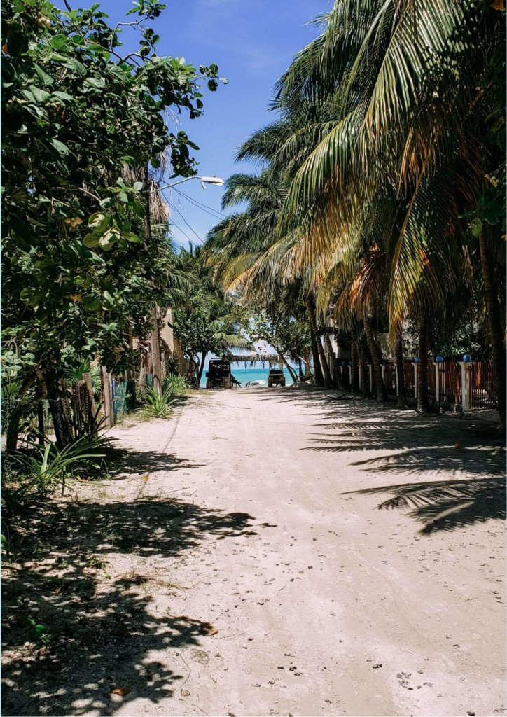 Things to Do in the Yucatan Peninsula: Isla Holbox with green palm trees