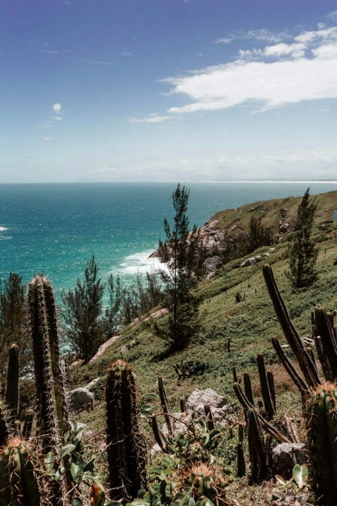 Cacti overlooking the ocean in Los Cabos, comparing Los Cabos and Cancun climate