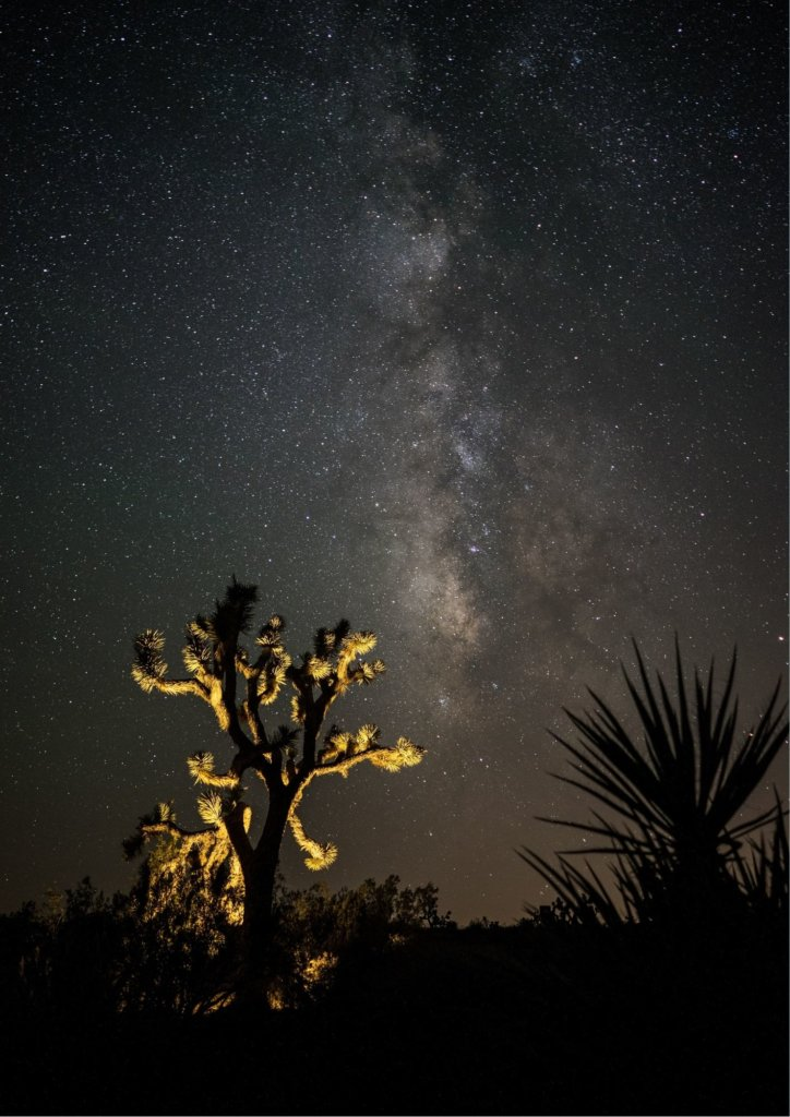 Joshua Tree Stargazing with thousands of stars in the sky.