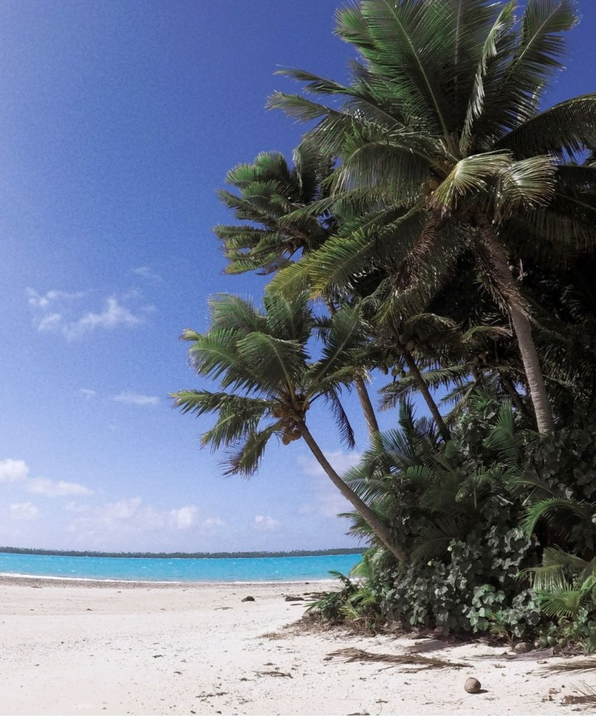 The green palm trees and blue ocean of the cook islands.