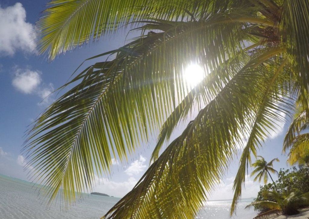 Bright sunshine coming through the palm leaves on the Cook Islands.