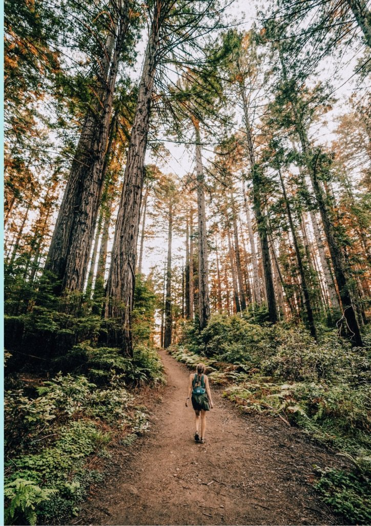 Simple Bucket List Ideas - go on a hike in the woods.