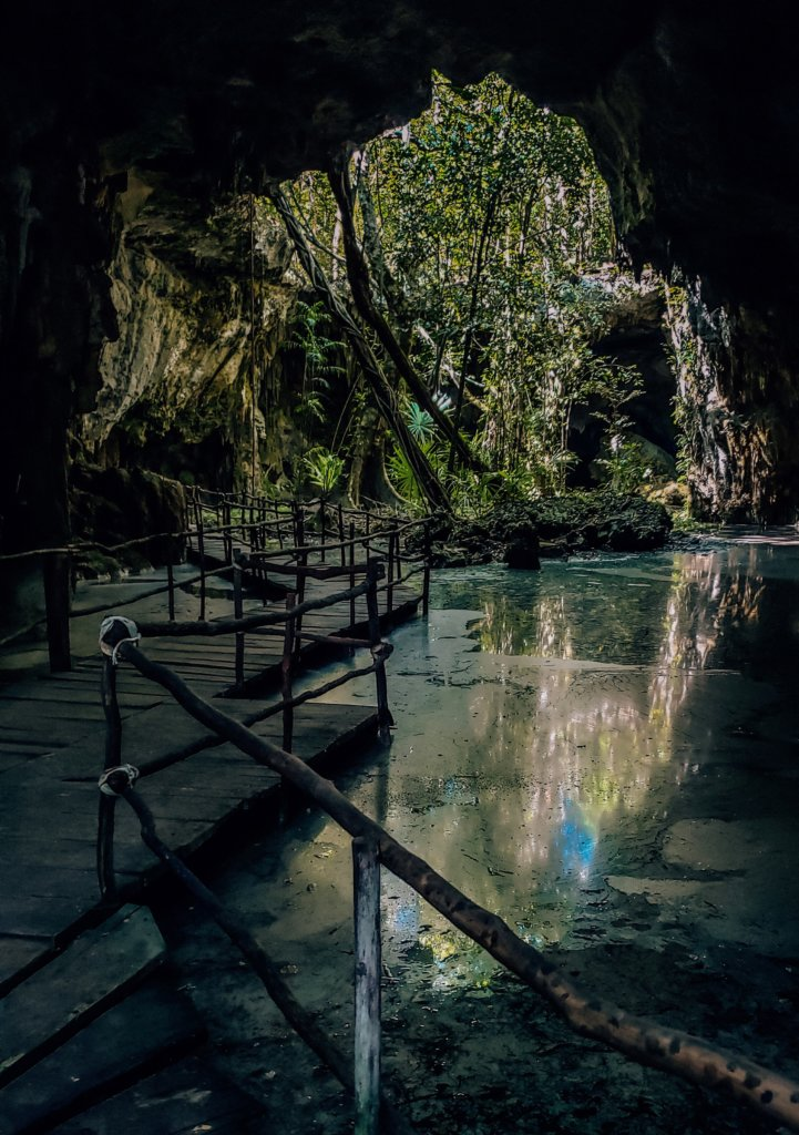 The open air portion of the cenote, showing green jungle.