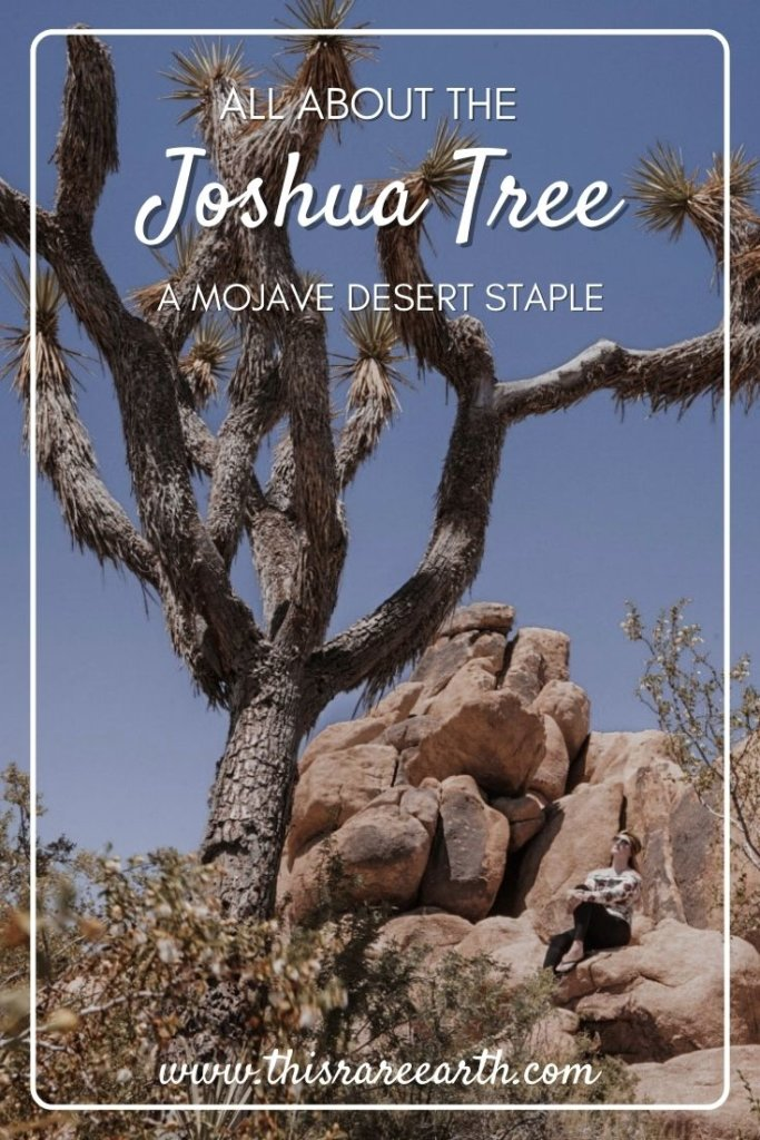 All About the Joshua Tree- A Mojave Desert Staple Pin.