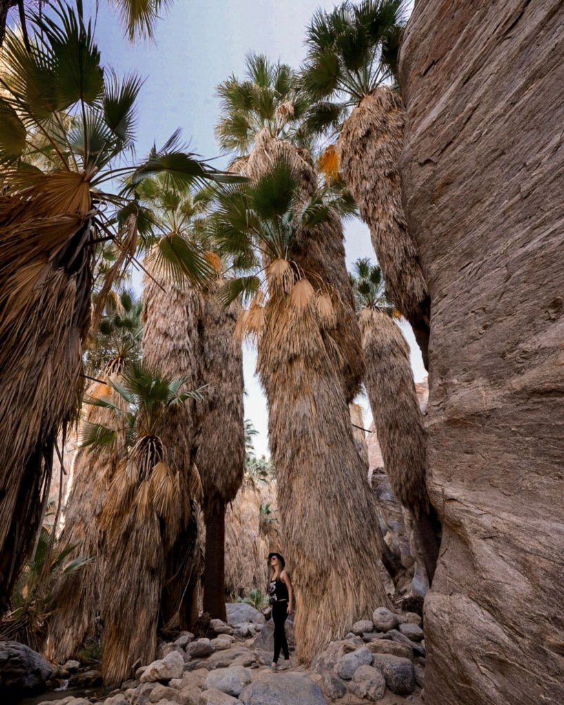 Unique Things to Do in California - see the world's largest California Fan Palm oasis.