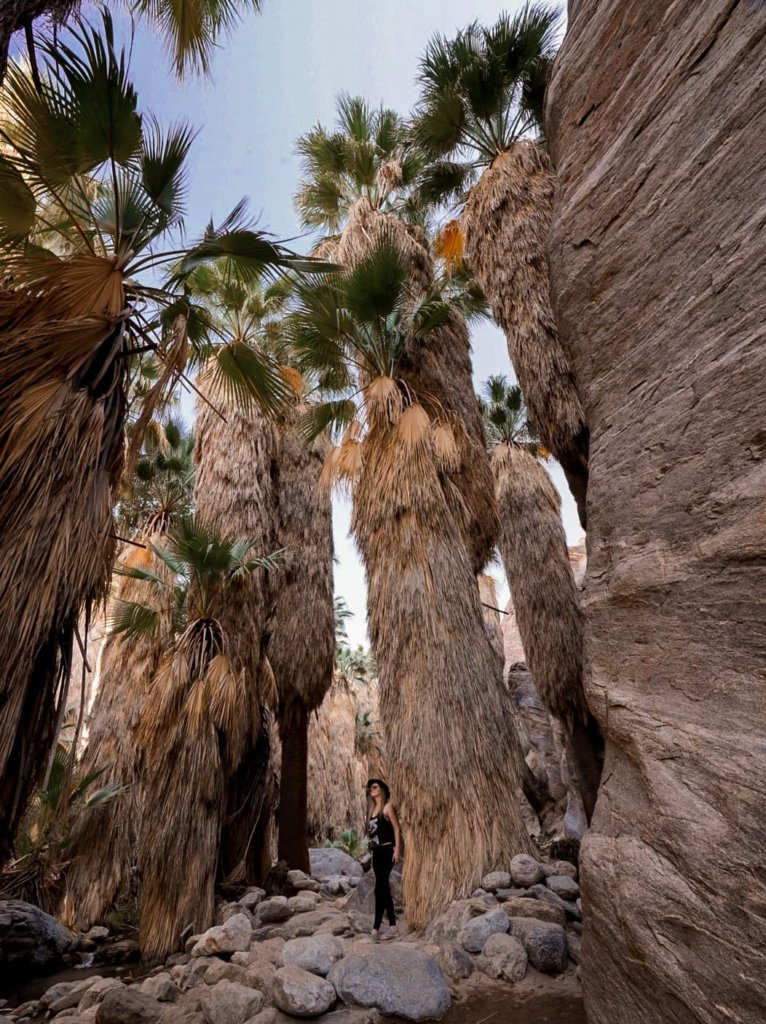 One of the best hiking trails in southern California - Palm Springs!