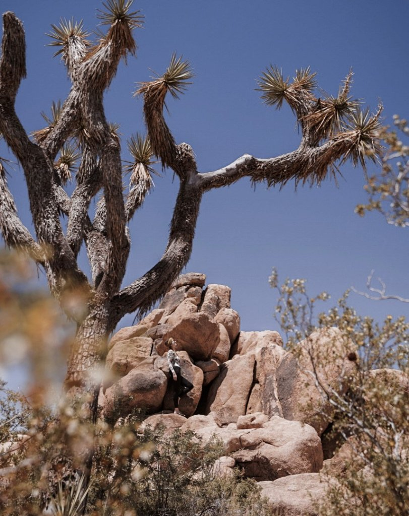 Enjoying the scenery on a one day trip to Joshua Tree National Park.